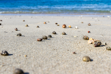 cluster of hermit crabs walking on the warm sands of a pacific beach in Costa Rica 스톡 콘텐츠