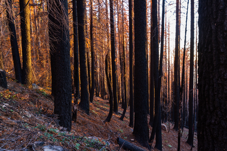 dead trees still standing as the sun sets behind the mountains after a large forest fire burned a large section of forest in the Red Blanket Mountain area of southern Oregon