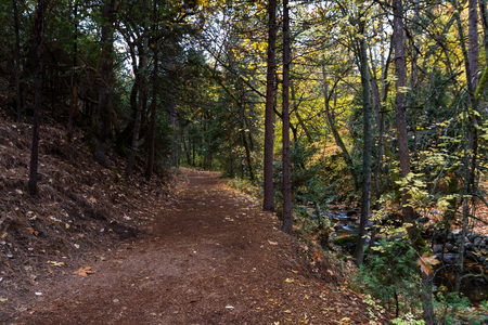 serene walking path next to the creek with a beautiful glow from the autumn leaves Imagens