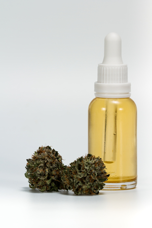 golden oil made from a cannabis extraction bottled in a jar with fresh harvested buds isolated on a white background