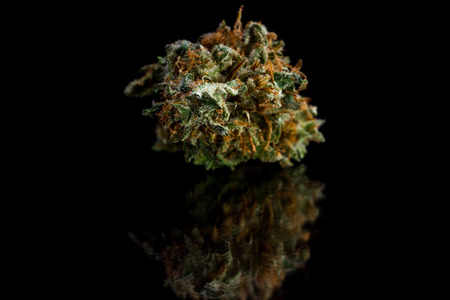 close up of a cut and trimmed bud of marijuana on a black reflective surface