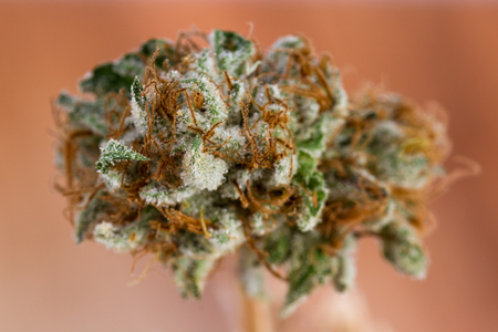 close up of a trimmed cannabis bud on a wooden table