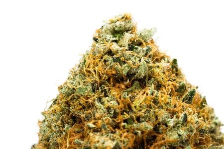 Macro de un cogollo de cannabis con increíbles cristales y fibras Foto de archivo