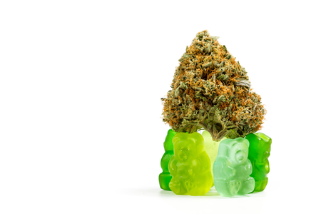 Gummy bears holding a marijuana bud isolated on a white background as an edible concept