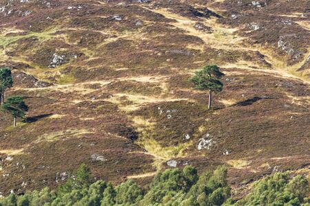 telephoto landscape of a lone tree in the hills of the Scottish highlands with soft light from the setting sun
