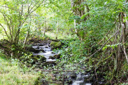 Tranquil creek flowing thru the eastern Scottish Highlands near Killiecrankie