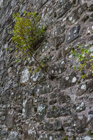 Balquhidder, Scotland  - September 17 2019: Details of the Ruins of the Old kirk where Rob Roy MacGregor and his family are buried, UK September 17, 2019 免版税图像