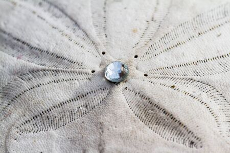 Close up of a sand dollar with a small gem in the middle glowing in the bright sunshine Stock Photo
