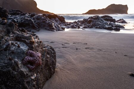 end of the day at secret beach with the tides slowly coming in and s lone sea star clinging to a  rock in the foreground 写真素材