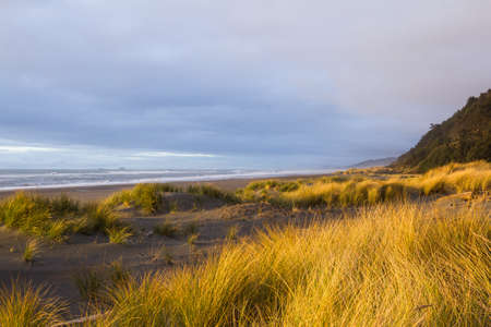 Bright golden color on the dried grass as the sun sets adding highlights and contrast to this costal scene in the southern Oregon coast