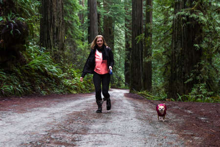 Woman walking her small dog thru a giant red wood forest in the southern Oregon coast Foto de archivo