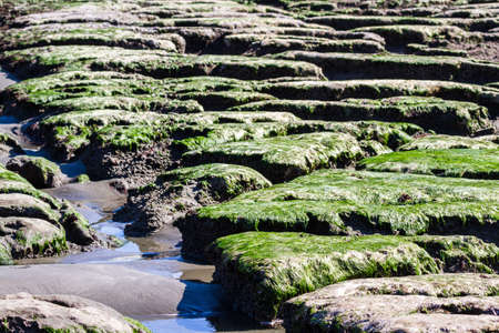 interesting volcanic rock in the south end of Pebble Beach in Northern California with moss covered rocks exposed by the low tide