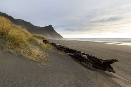 Large drift log stuck in the grassy dunes with Cape Sebastian in the background as the sun dips below the fog line adding a splash of light and color to the scene Stok Fotoğraf - 152841985