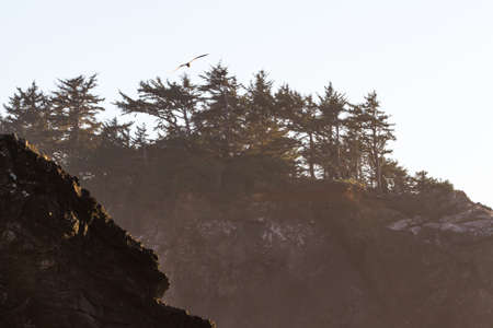 beautiful landscape classic of the Oregon coast with islets topped with evergreen trees and a light coastal mist in the air adding a bit of a glow to the scene