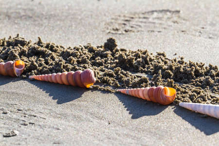 Close up of long spiral shells decorating a piece of art drawn in the sand Stok Fotoğraf