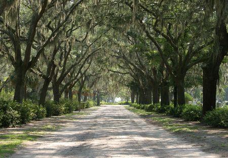 Pathway between the oak trees