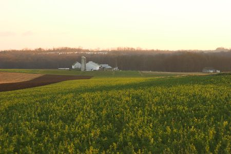 campo in erba medica Amish paese, Pennsylvania