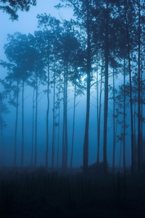 dark backlit forest at night, blue tint, moody shot Stock Photo