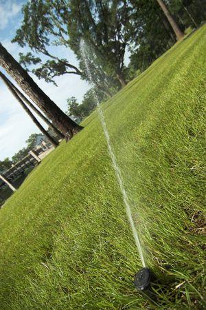 sprinkler head watering green lawn Imagens
