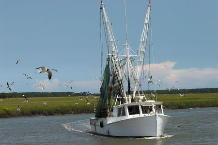 shrimp boat surrounded by hungry gulls