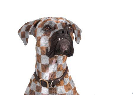 flamboyant: hond met flamboyant controle patroon