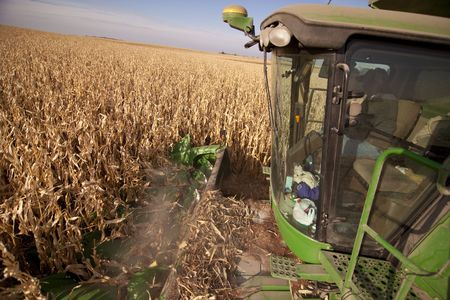 thresh: harvesting corn with a combine in south dakota Stock Photo