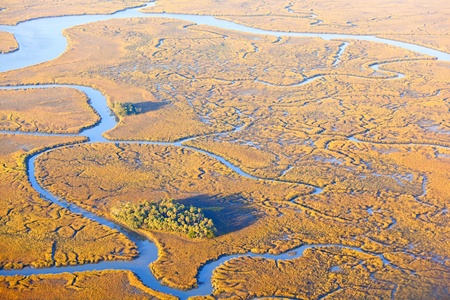 salt marsh: aerial view of small islands with palm trees and estuary