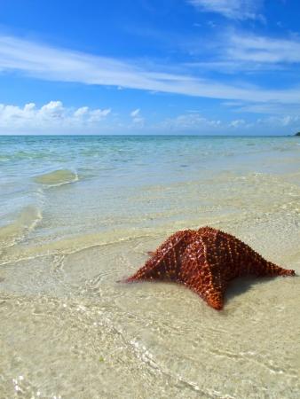 starfish on tropical beach in grand bahama