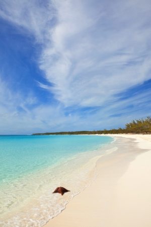 beach and starfish with turquoise waters in bahamas