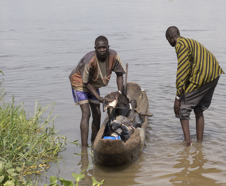 white nile: BOR, SOUTH SUDAN-JUNE 26 2012: Unidentified fishermen haul fish out of a canor in Bor, South Sudan.