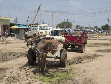 destitute: donkey and cart in slum in south sudan Editorial