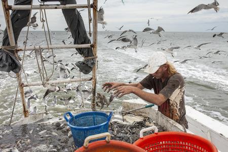 Dekhand sorteren vis op het dek van een vissersboot Stockfoto