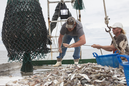 Deckhands bring a net full of fish onto the deck of a fishing boat Stockfoto