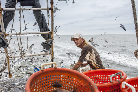 trawler: commercial fisherman sorting catch on deck of trawler