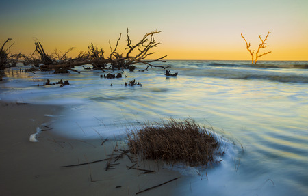 south park: time exposure of waves covering driftwood in Hunting Island State Park, South Carolina