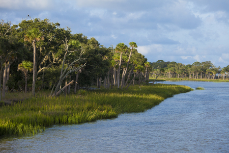 salt marsh: Maritime forest and lagoon in South Carolina Stock Photo