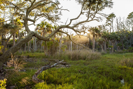 salt marsh: forest and salt marsh in South Carolina Stock Photo