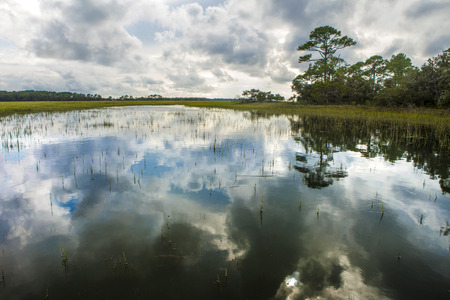 salt marsh: coastal estuary in South Carolina