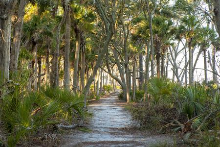 playas tropicales: camino a través de las palmeras con la luz del sol de oro
