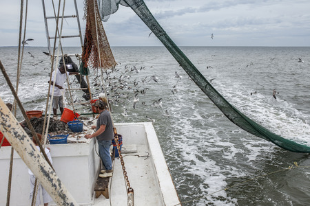 shrimp boat: Commercial fishermen sorting catch in South Carolina Stock Photo