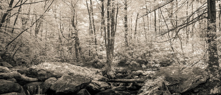rocks water: Infrared photo panorama of forest in South Carolina