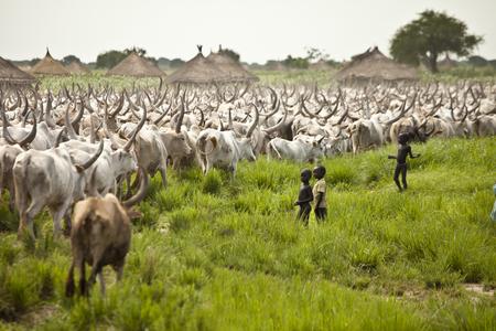 LILIIR, 남부 수란 -6 월 24, 2012 : 어린이 가축의 거 대 한 무리는 남 수단에서 그들의 마을 과거 이동