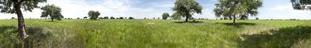 Seamless 360 degree panorama of South Sudan