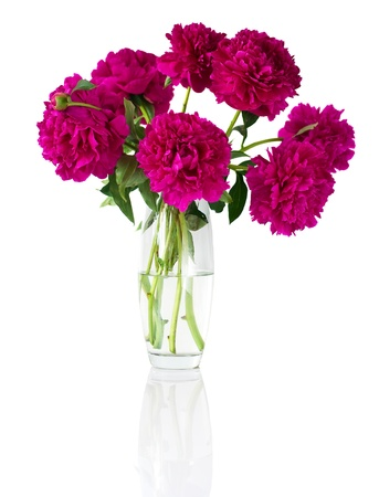 Bouquet of peonies in vase, isolated on white