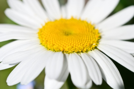 mach 1: chamomile flower macro, depth resolution is short Stock Photo