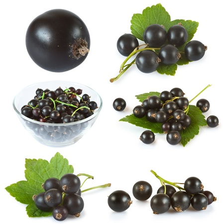 set of black currant with green leaves isolated over white background photo