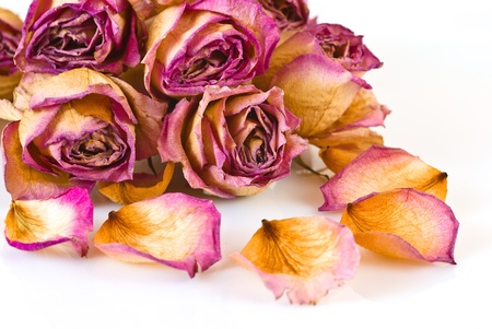 Dried roses and petals on white background