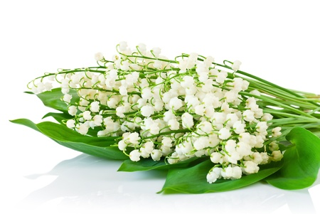floristic: Bouquet of lilies of the valley on white background