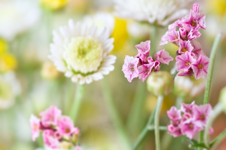 mother'sday: Beautiful pink flowers on natural background Stock Photo