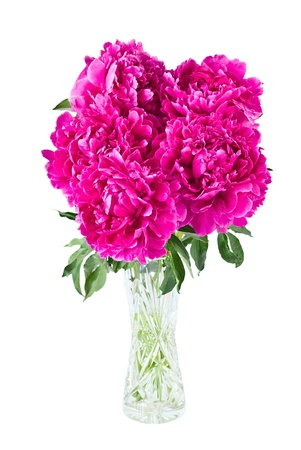 Bouquet of peonies in vase, isolated on white photo